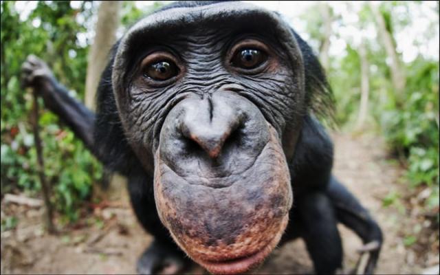 Chimpanzees-beat-Avatar-hd-picture-widescreen-wallpaper-1680x1050-4-50e633282e43f-8209 copy
